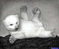 Как правильно нарисовать маленького медвежонка карандашом