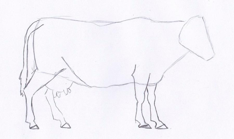 Как просто нарисовать корову  для начинающих - шаг 2