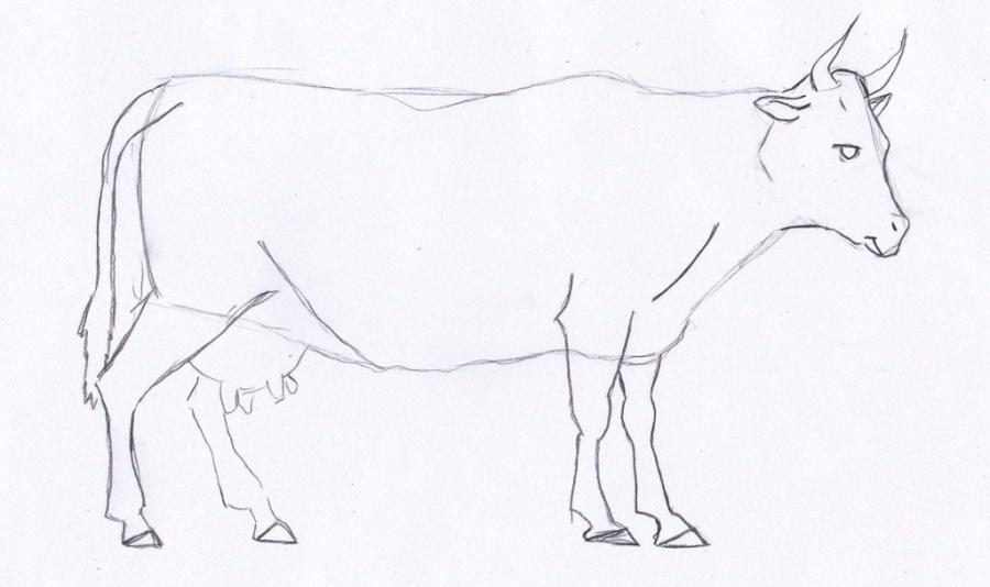 Как просто нарисовать корову  для начинающих - шаг 3