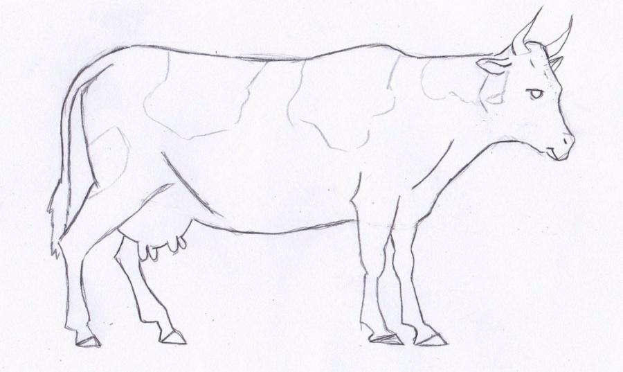 Как просто нарисовать корову  для начинающих - шаг 4