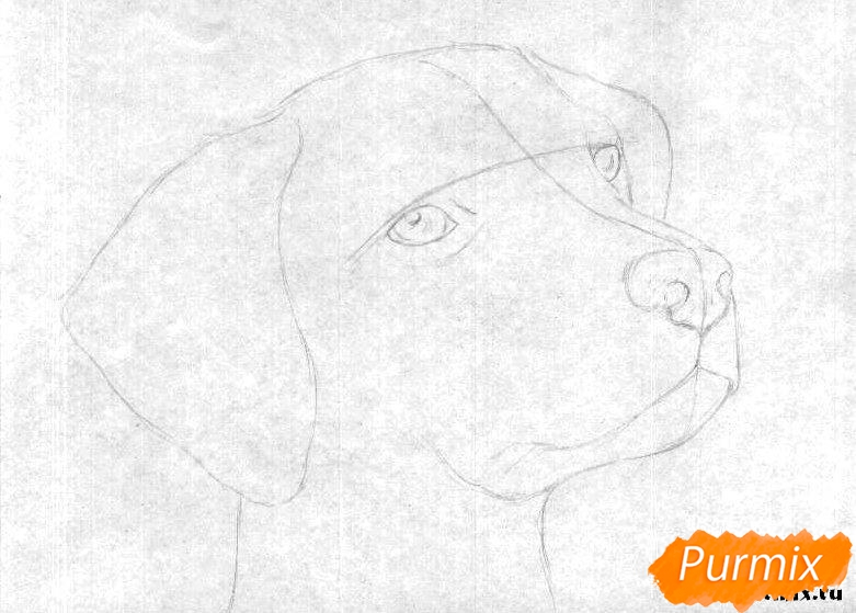 Как рисовать голову далматинца - шаг 1
