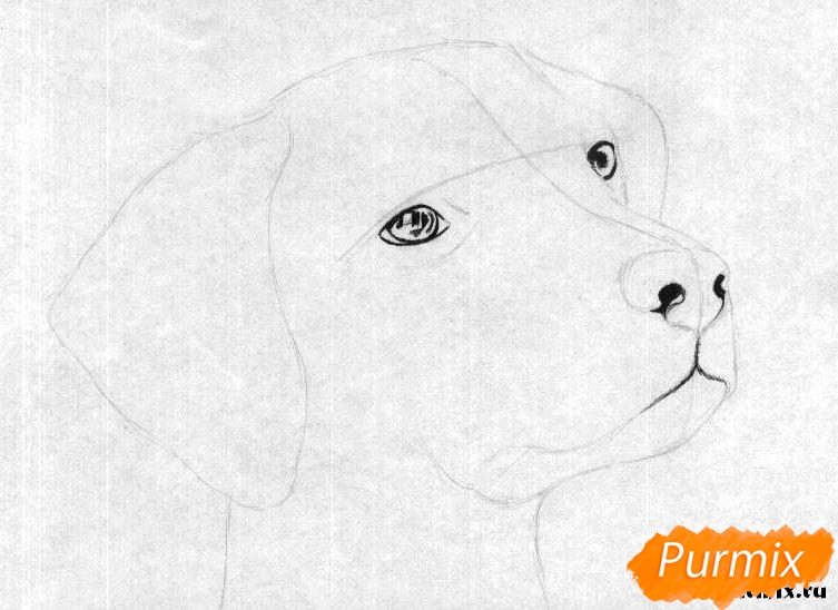 Как рисовать голову далматинца - шаг 2