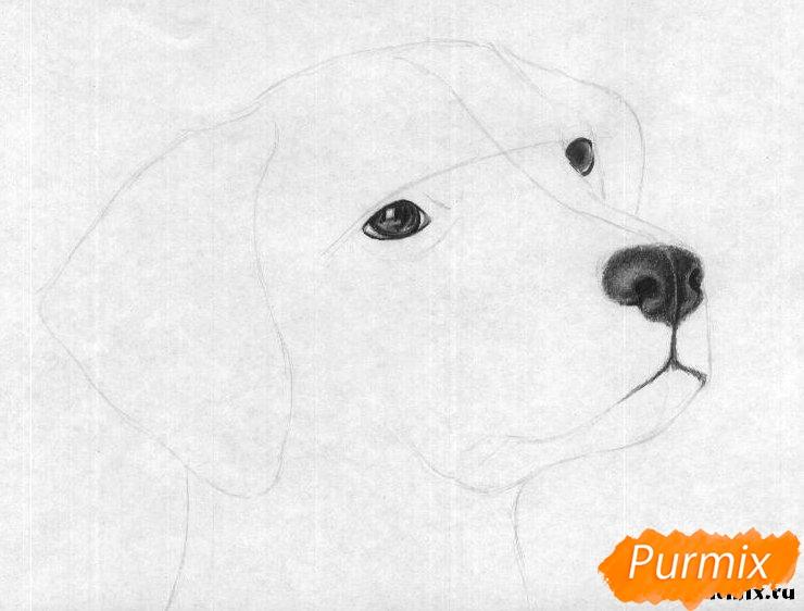 Как рисовать голову далматинца - шаг 3