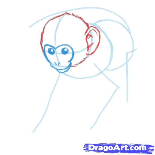 Рисуем обезьяну - шаг 3