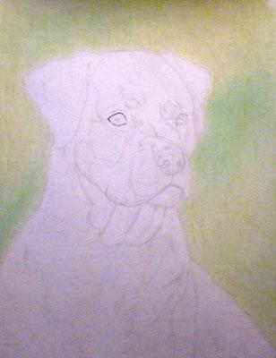 Рисуем ротвейлера цветными карандашами - шаг 1