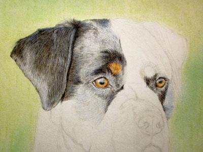 Рисуем ротвейлера цветными карандашами - шаг 6