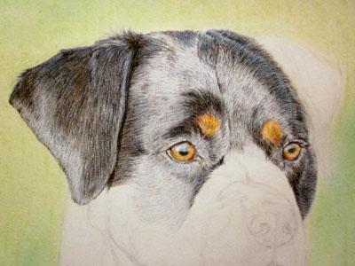 Рисуем ротвейлера цветными карандашами - шаг 7