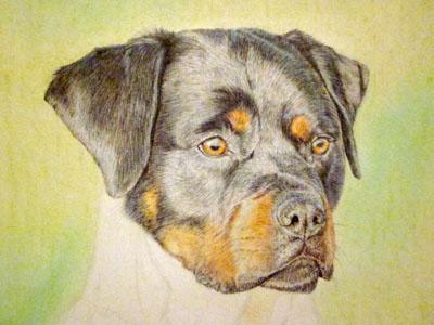 Рисуем ротвейлера цветными карандашами - шаг 11