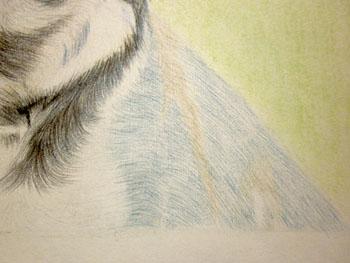 Рисуем ротвейлера цветными карандашами - шаг 15