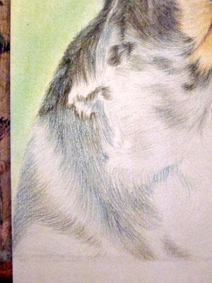 Рисуем ротвейлера цветными карандашами - шаг 13