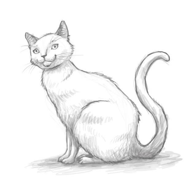 сидящую кошку