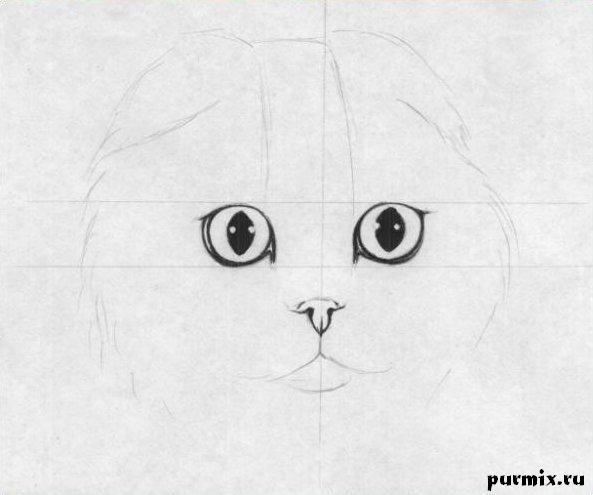 Рисуем шотландскую вислоухую кошку простым - шаг 2