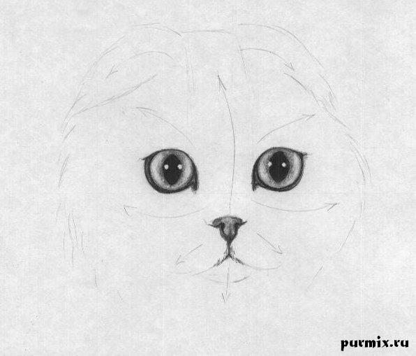 Рисуем шотландскую вислоухую кошку простым - шаг 3