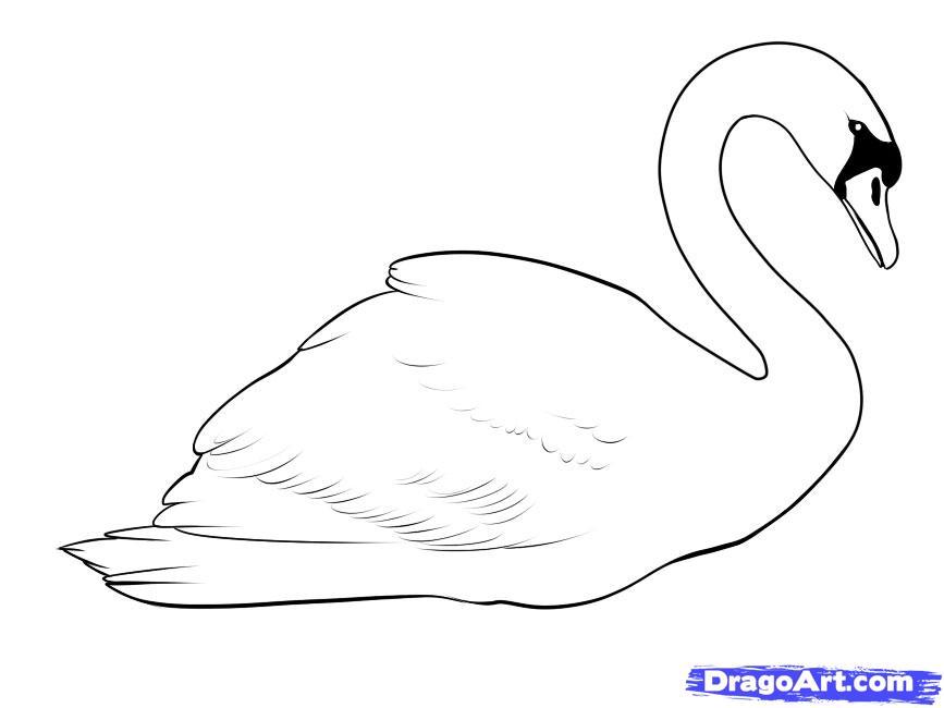 Учимся рисовать лебедя - шаг 8