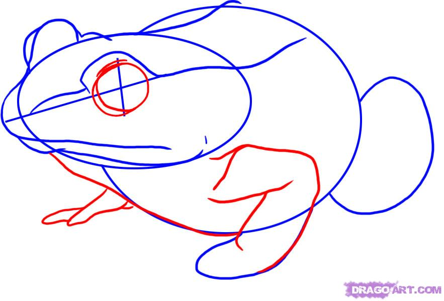 Рисуем лягушку   для начинающих - шаг 3