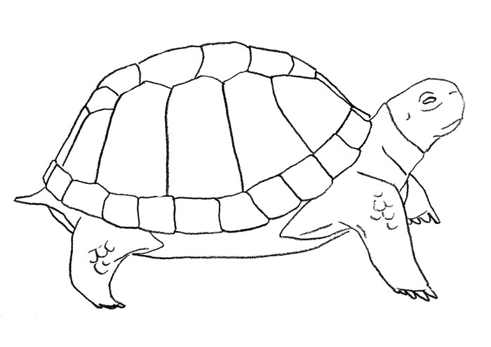 Как просто нарисовать черепаху - шаг 4