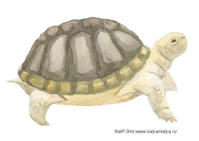 Как просто нарисовать черепаху - шаг 5