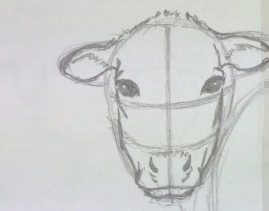 Учимся рисовать корову простым  шаг за шагом - шаг 3