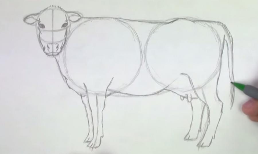 Учимся рисовать корову простым  шаг за шагом - шаг 4