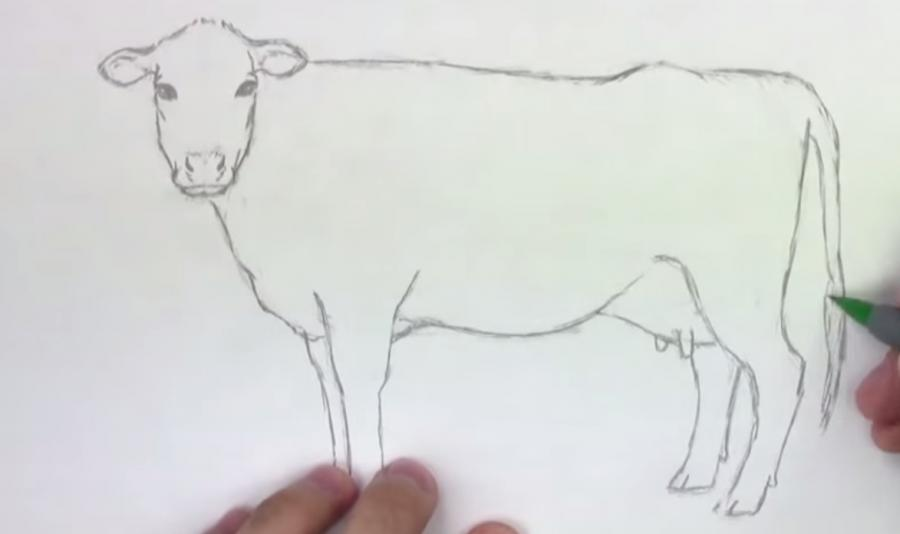 Учимся рисовать корову простым  шаг за шагом - шаг 5