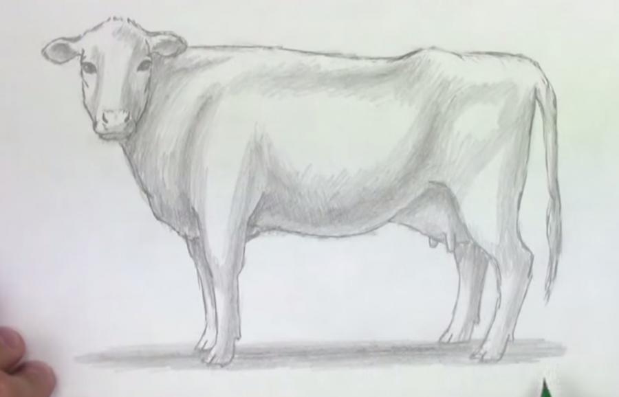 Учимся рисовать корову простым  шаг за шагом - шаг 6