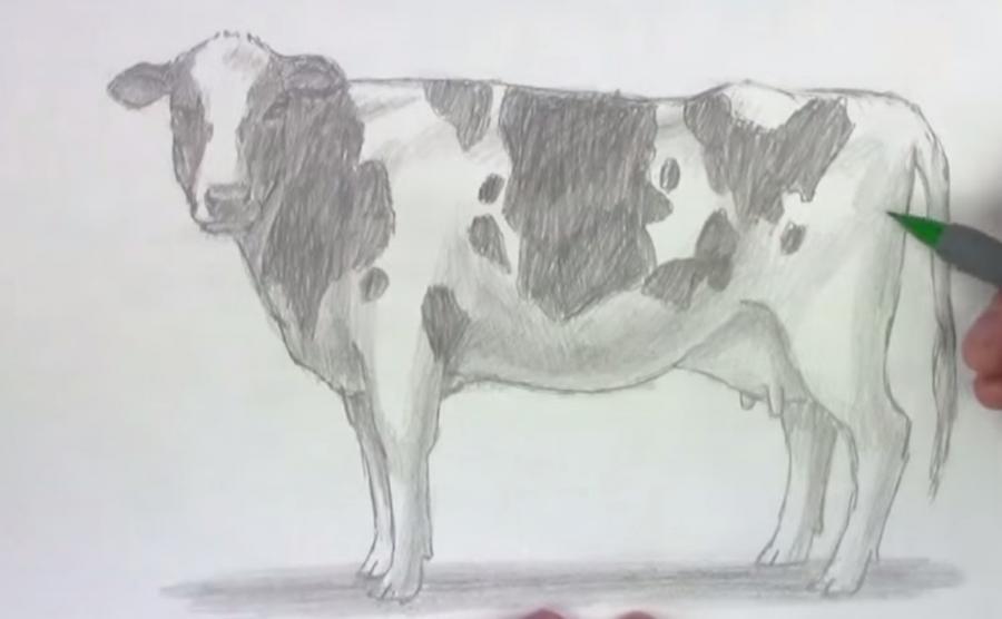 Учимся рисовать корову простым  шаг за шагом - шаг 7