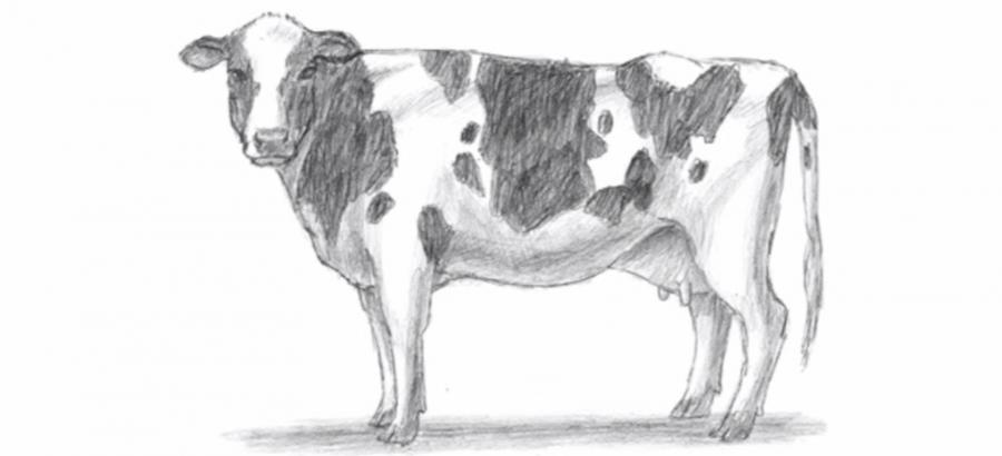 Учимся рисовать корову простым  шаг за шагом - шаг 8