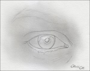 Рисуем реалистичный глаз девушки - шаг 2
