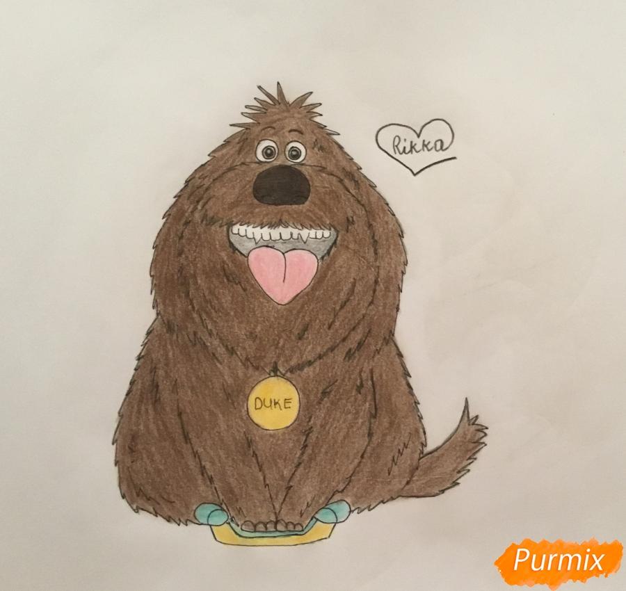 Рисуем собаку Дюка из мультфильма Тайная жизнь домашних животных - шаг 8