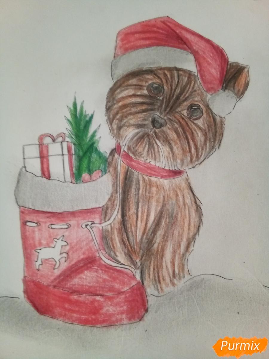 Рисуем новогоднего щеночка породы йоркширский терьер в шапочке - шаг 12