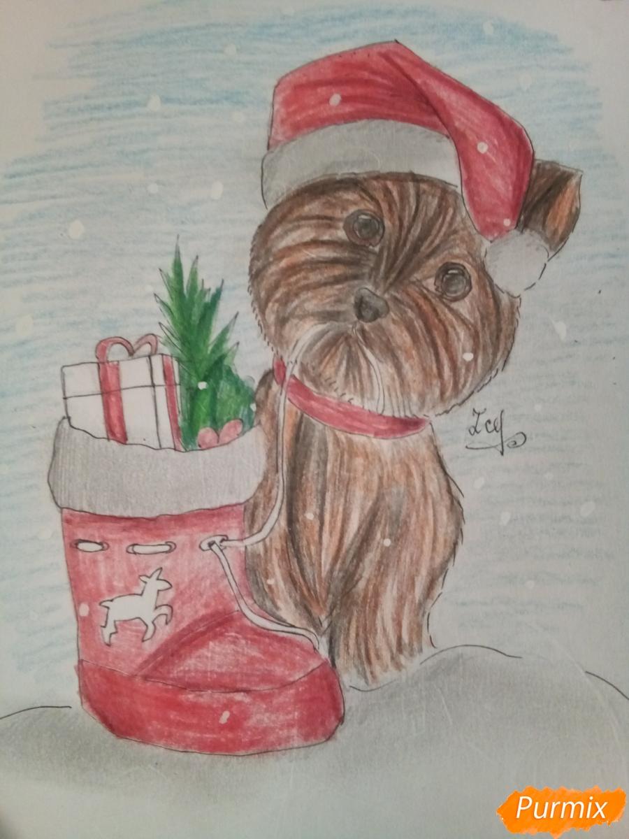 Рисуем новогоднего щеночка породы йоркширский терьер в шапочке - шаг 13