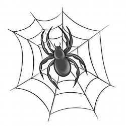 Фото паука на Хэллоуин