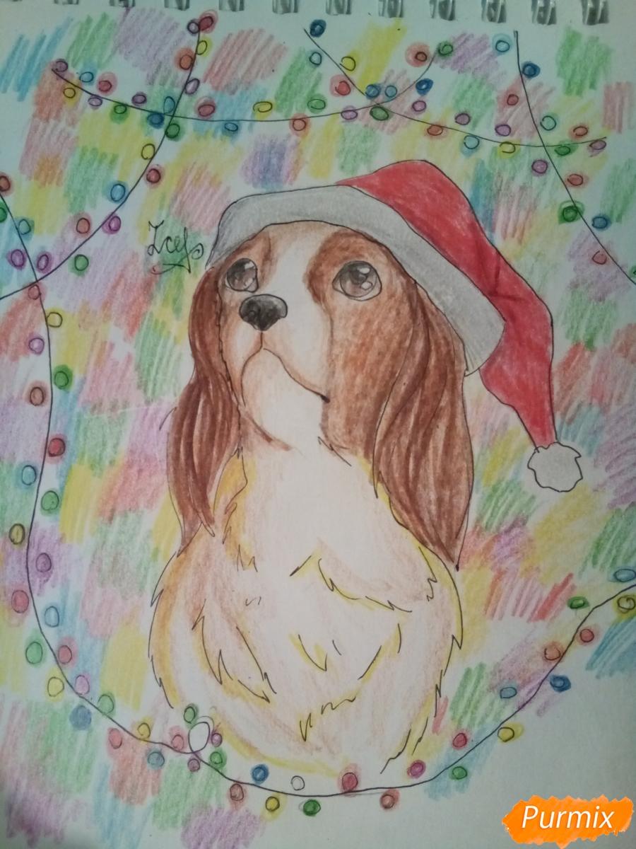 Рисуем собачку породы кавалер кинг-чарльз-спаниель на новый год - шаг 12