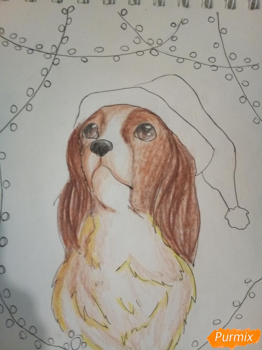 Рисуем собачку породы кавалер кинг-чарльз-спаниель на новый год - шаг 9