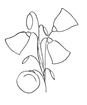 Рисуем колокольчик цветок - шаг 3