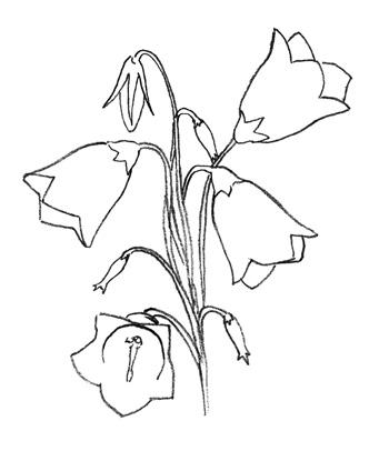 Рисуем колокольчик цветок - шаг 4