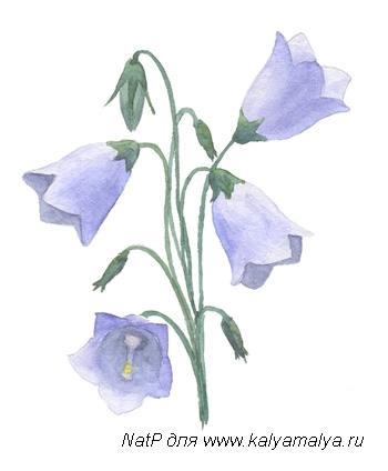Рисуем колокольчик цветок - шаг 5