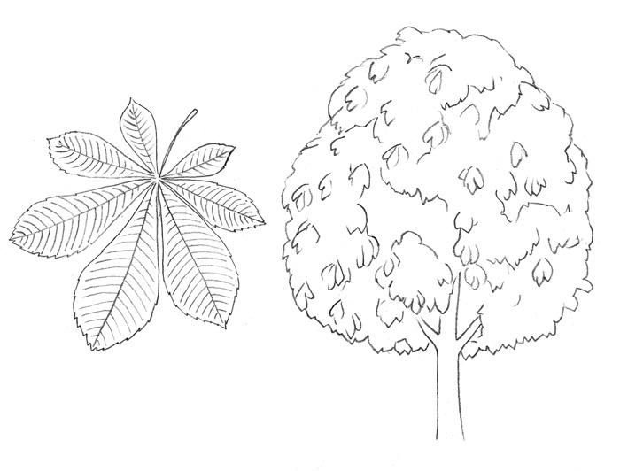 Как легко нарисовать каштановое дерево - шаг 2