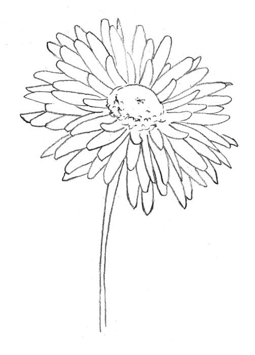 Рисуем хризантему - шаг 2