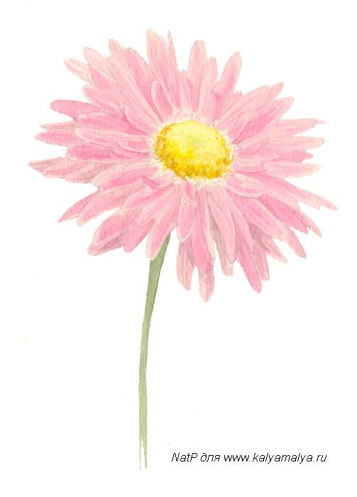 Рисуем хризантему - шаг 3