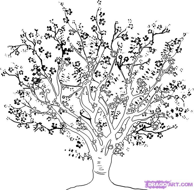 Рисуем вишневое дерево - шаг 4