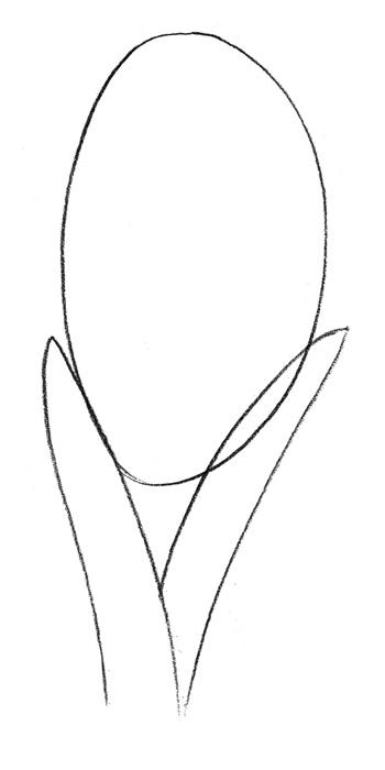 Рисуем гиацинт  или красками - шаг 1