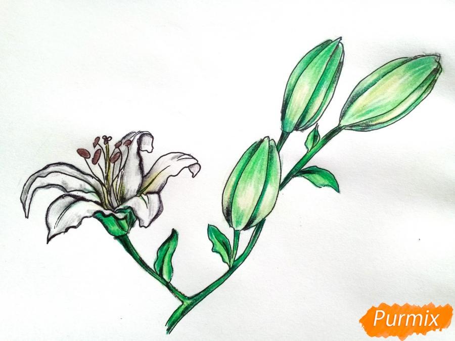 Рисуем белую лилию - шаг 10