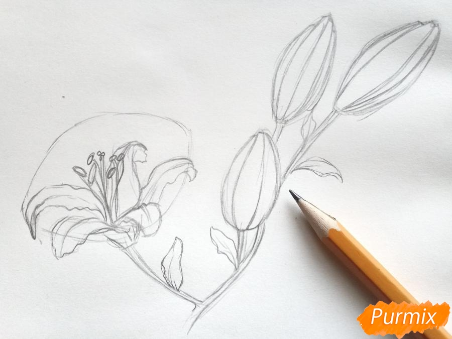 Рисуем белую лилию - шаг 4