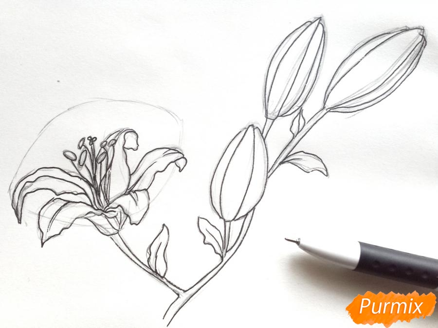 Рисуем белую лилию - шаг 5