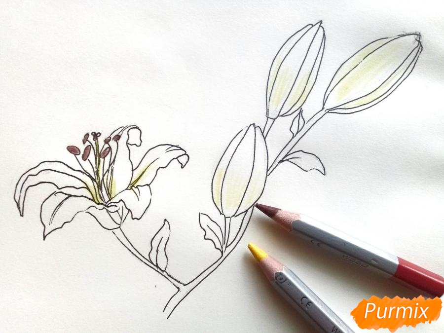 Рисуем белую лилию - шаг 6