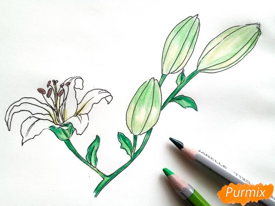 Рисуем белую лилию - шаг 7