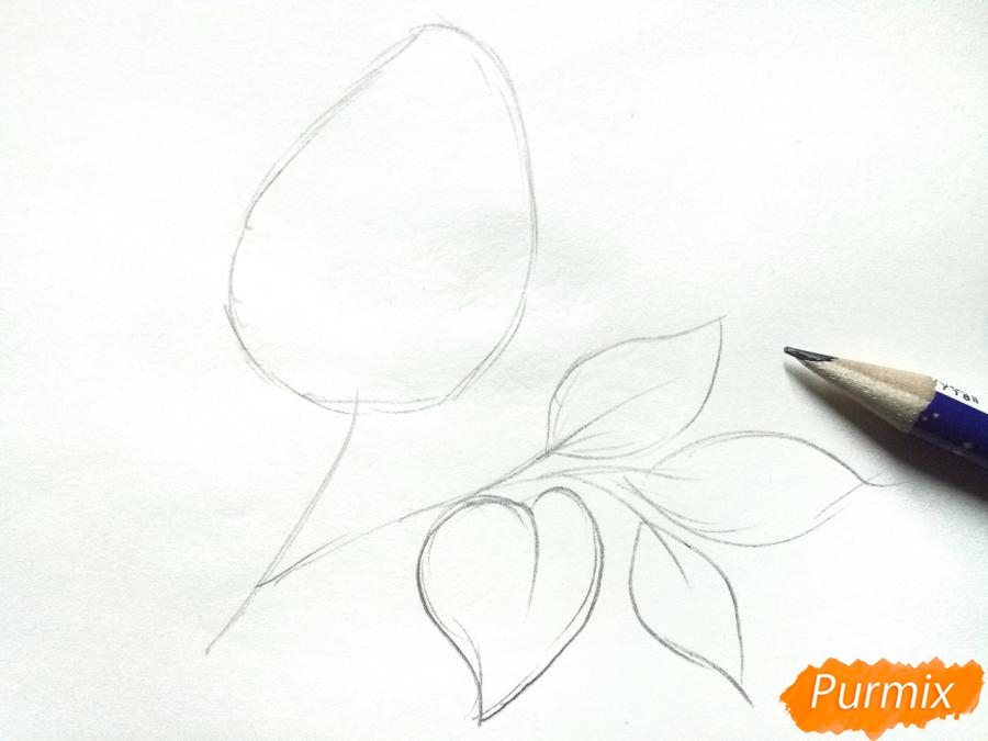 Рисуем белую сирень - шаг 2