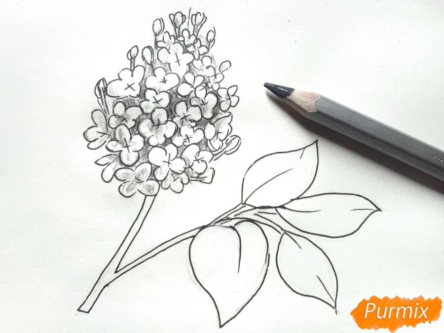 Рисуем белую сирень - шаг 5