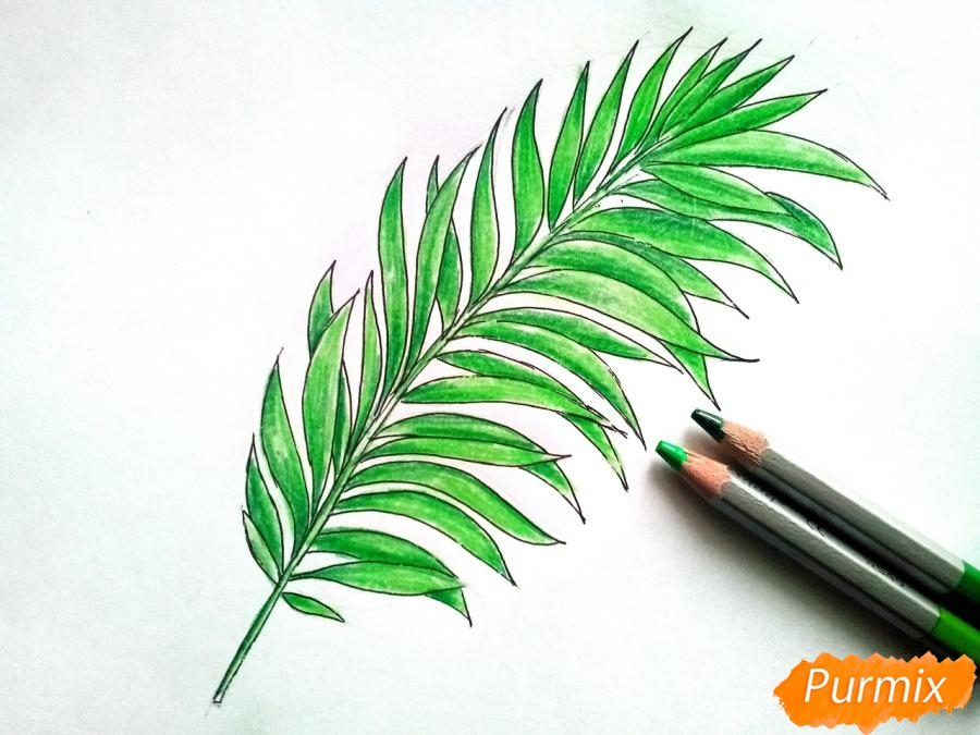 Рисуем большой лист пальмы - шаг 4